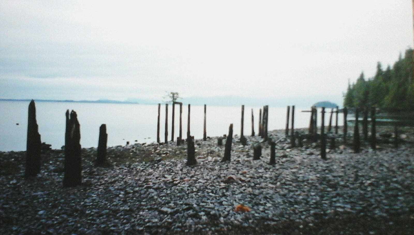 Lonely, burned pilings standing sentinel over the ruinsof the Union Bay cannery, and the beautiful view. Photo by Tara Neilson.