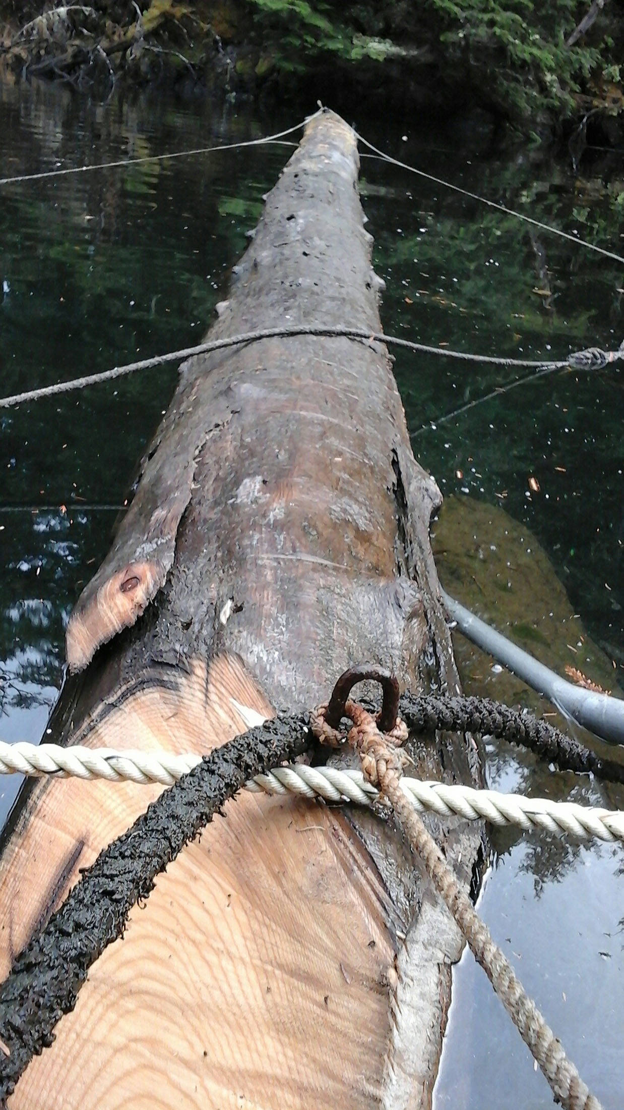 The new log's pointed end is ready to be pushed under the floathouse's brow log. Photo by Tara Neilson
