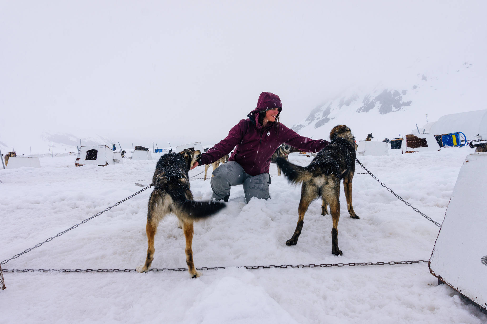 Britney Ooman pets dogs at dog camp to conclude our traverse. (Gabe Donohoe   For the Juneau Empire)