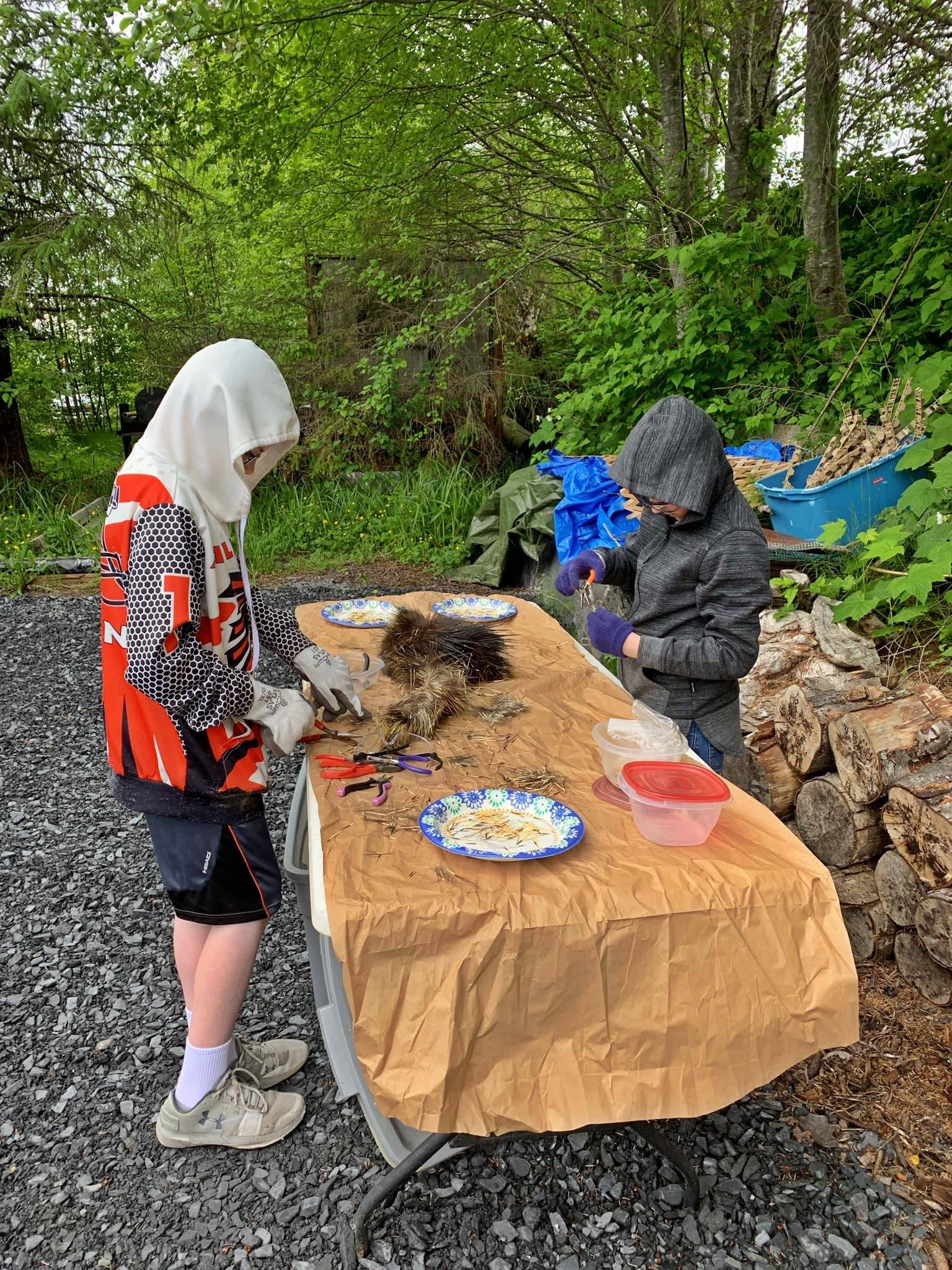 Timothy and Jackson Pearson harvest porcupine quills at Mickey's Fishcamp in Wrangell. (Vivian Faith Prescott | For the Capital City Weekly)