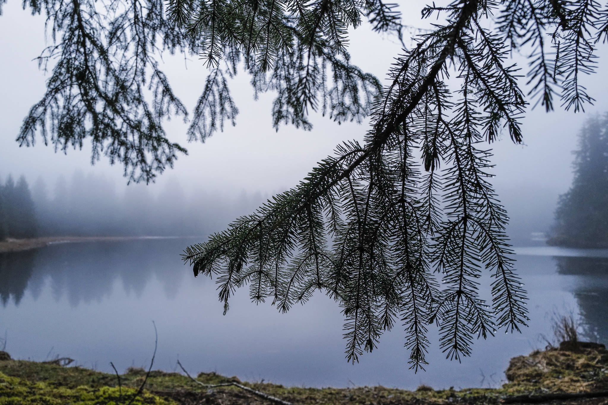 Spruce boughs hang near a pond in the Tongass National Forest on Monday, Dec. 9, 2019. (Michael Penn | Juneau Empire)