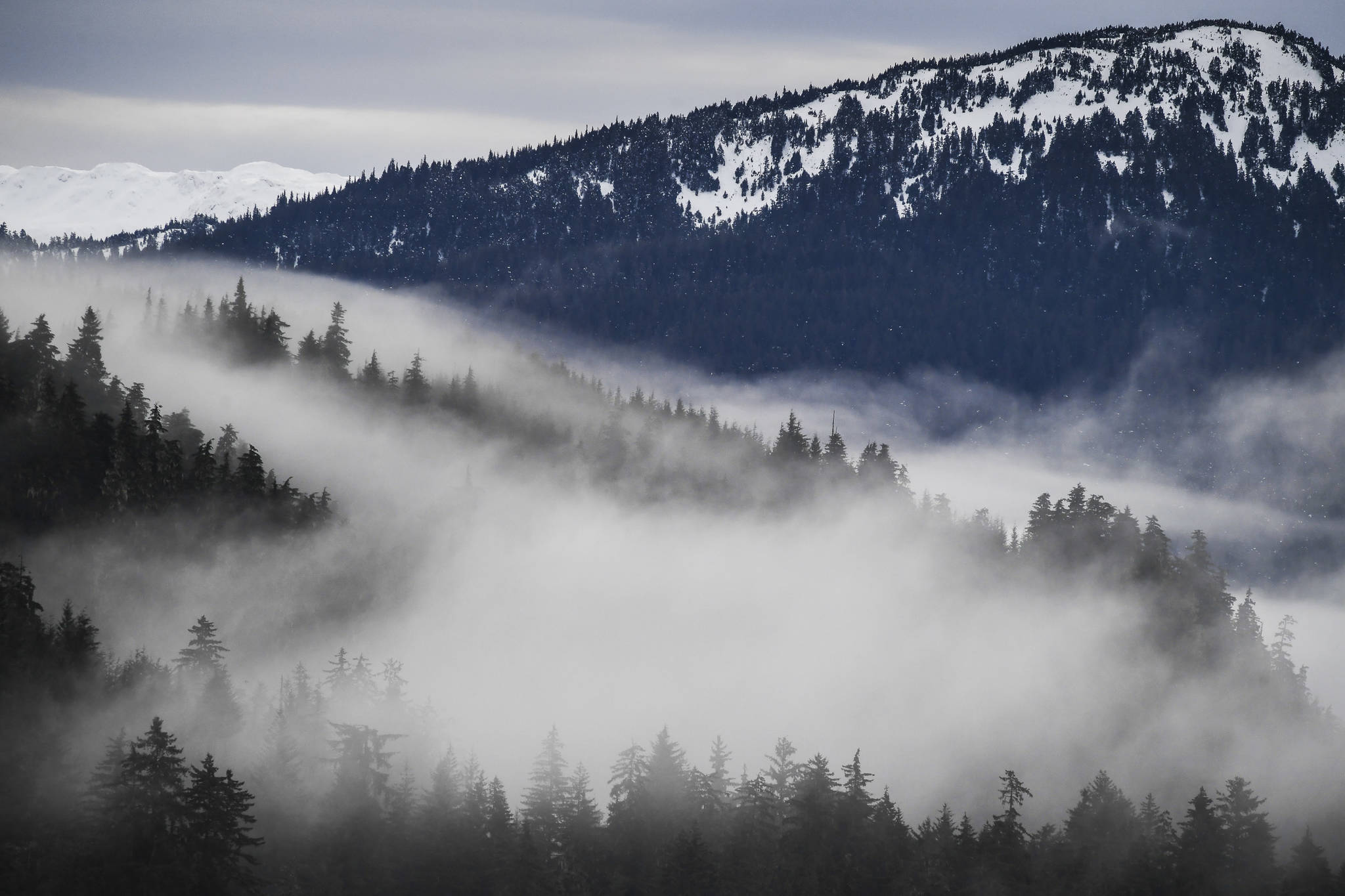 Fog drifts through the trees in the Tongass National Forest on Monday, Dec. 9, 2019. (Michael Penn | Juneau Empire File)
