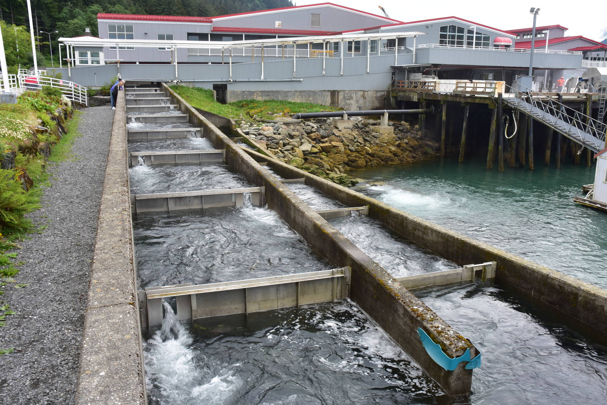 Some salmon return, but 'not nearly enough'