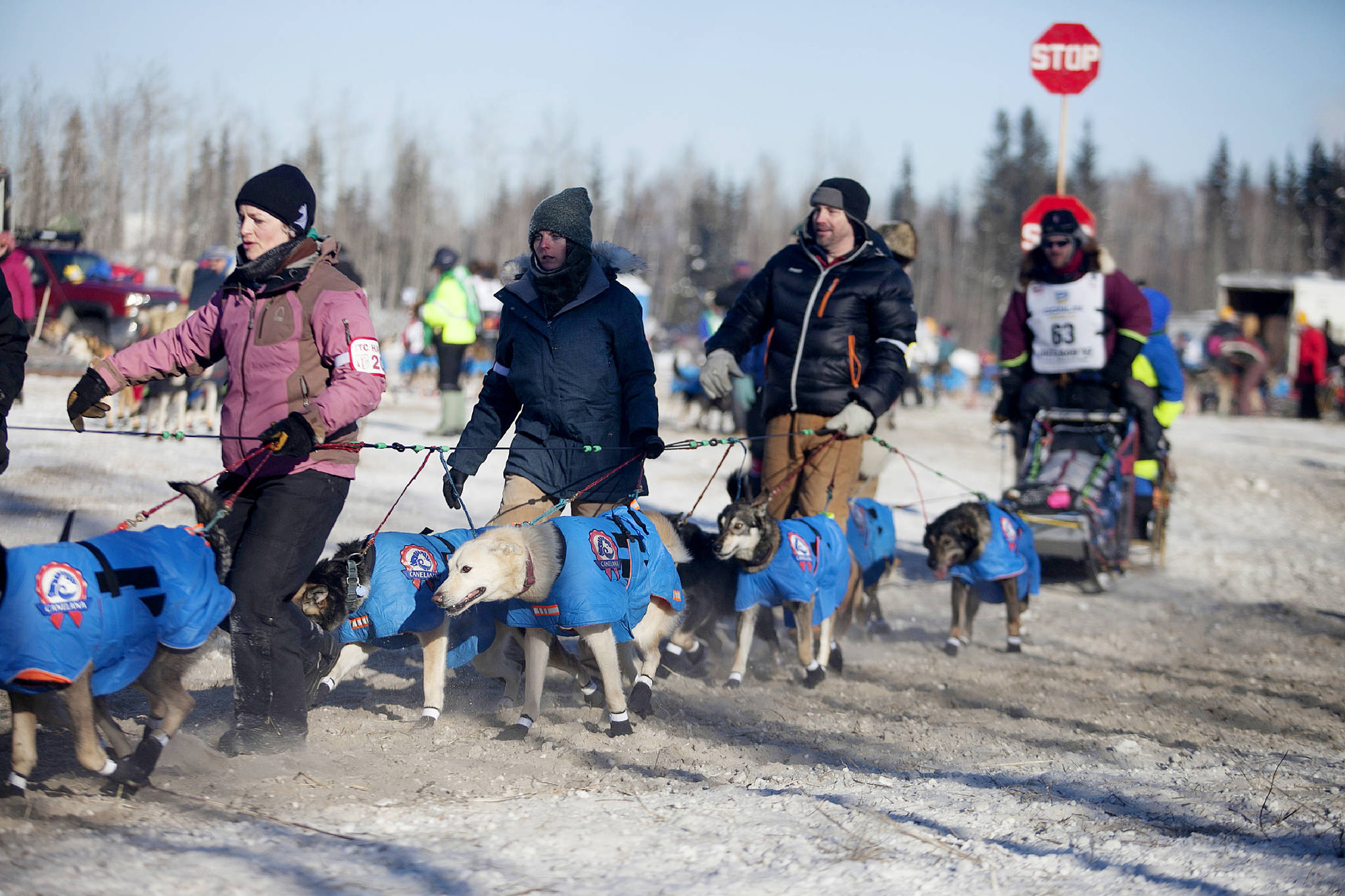 Associated Press                                 In this March 2017 photo, volunteer handlers guide teams out of the dog yard and down the chute to the starting line of the 45th Iditarod Trail Sled Dog Race in Fairbanks, Alaska. The world's most famous sled dog race will go forward in 2021, and officials are preparing for every potential contingency now for what the coronavirus and the world might look like in March when the Iditarod starts.