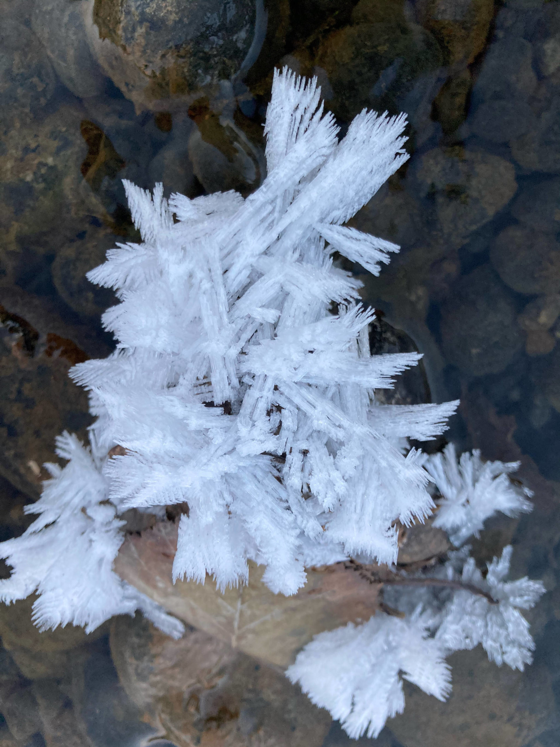 Snow flowers are seen along the Mendenhall River on Nov. 17. (Courtesy Photo / Deborah Rudis)