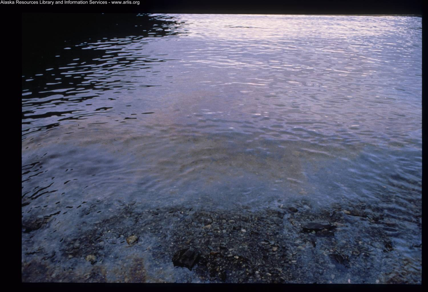 Oil sheen bleeds from the beach at Herring Bay on Knight Island on Dec. 7, 1989. (Courtesy Photo / ARLIS Reference)