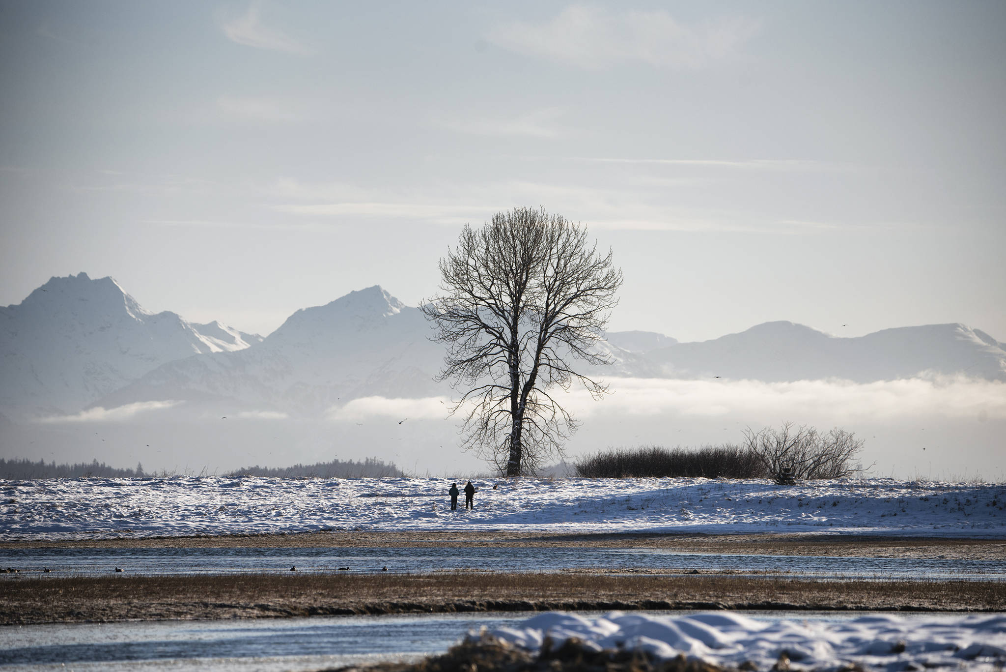 One tree stands alone with the Chilkat Range in the background on Jan. 31, 2021. (Courtesy Photo / Kenneth Gill, gillfoto)