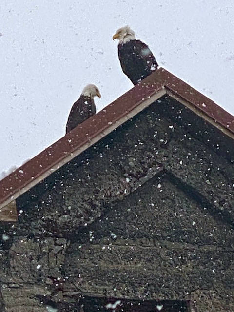 In a snowstorm, two eagles visit the iconic pump house near Sandy Beach on March 20. (Courtesy Photo / Denise Carroll)