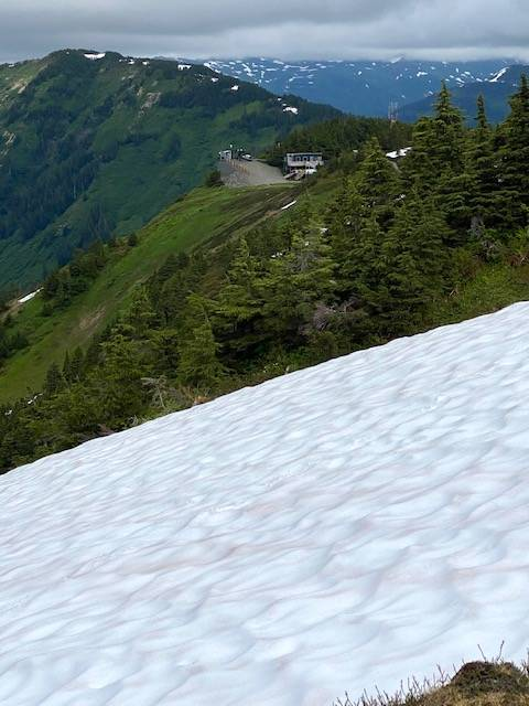Looking across an avalanche area at the top of ptarmigan ski run on July 7. (Courtesy Photo / Denise Carroll)