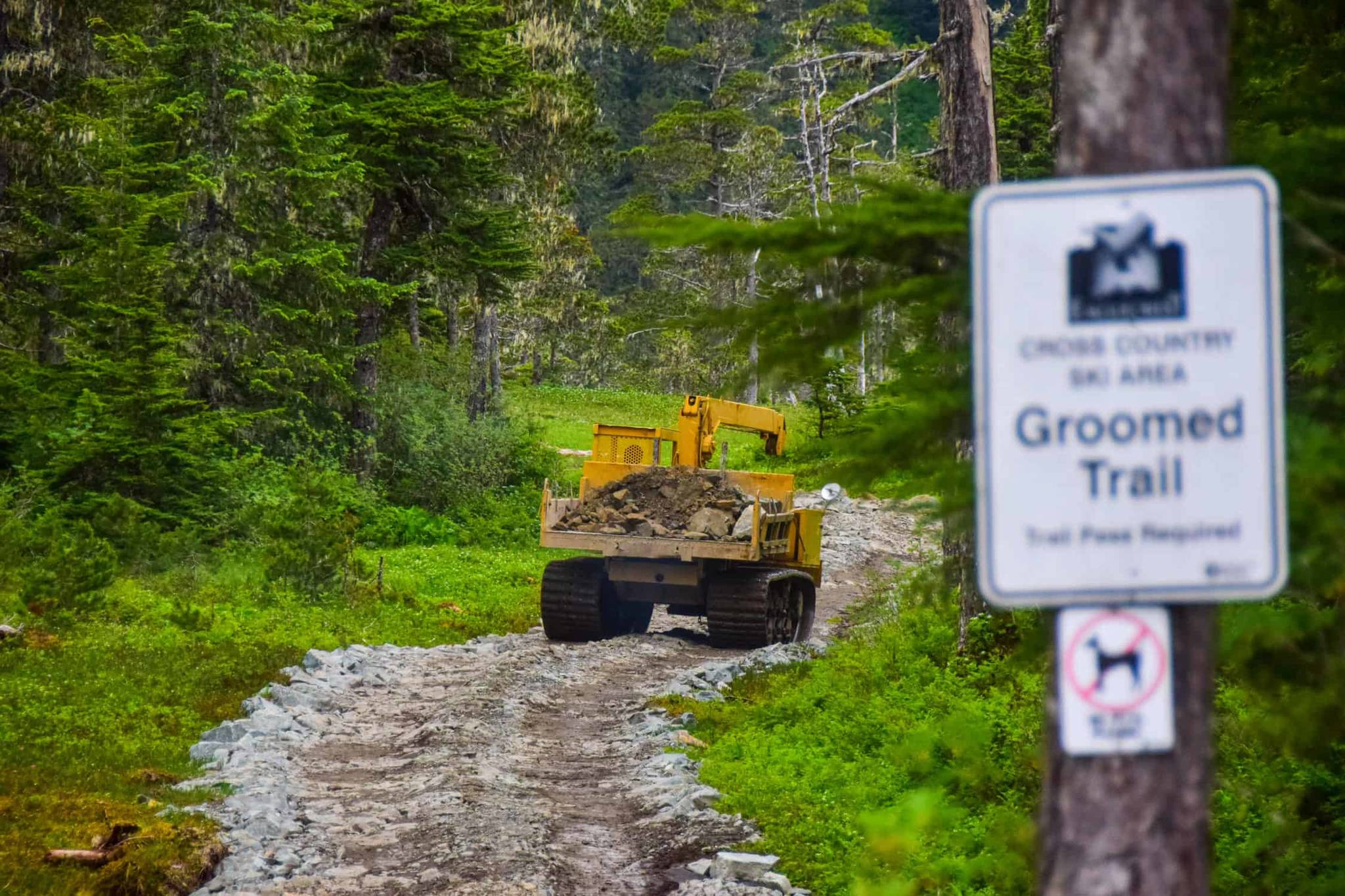 Eaglecrest Ski Area is working to improve its lower Nordic trails, hardening them to provide a better base for grooming equipment during the winter season, among other improvements this summer. (Courtesy photo / Charlie Herrington)